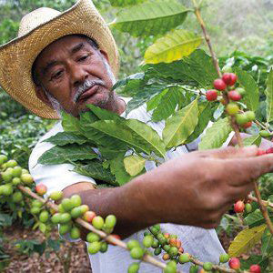 HUMBLE JUAN - Coffee Beans for Espresso