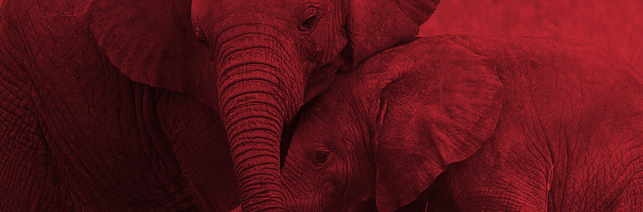 End Ivory Trade Header Image