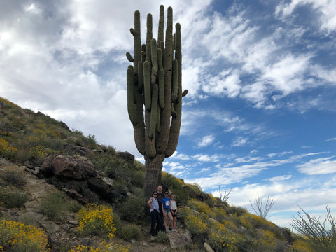 300 hundred years old cactus