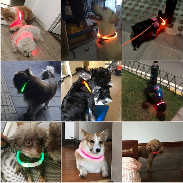 Glowing LED Dog Collar, USB Rechargeable 50 cm white