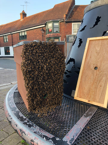 Homey Honey Ringwood New Forest - Swarm caught in Ringwood