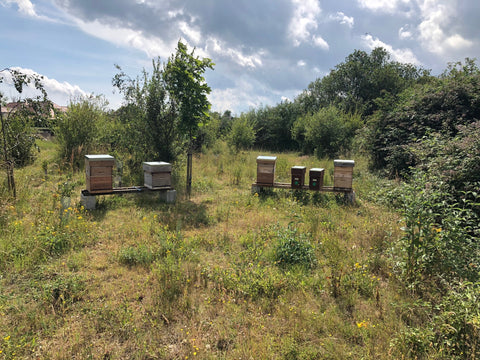 Ringwood, New Forest Apiary set up