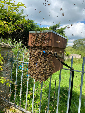 Ringwood Honey, Local New Forest Honey - Early Spring Swarm
