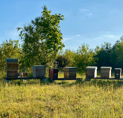 Ringwood Local New Forest Honey Apiary