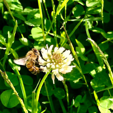 Ringwood New Forest Honey - White Clover
