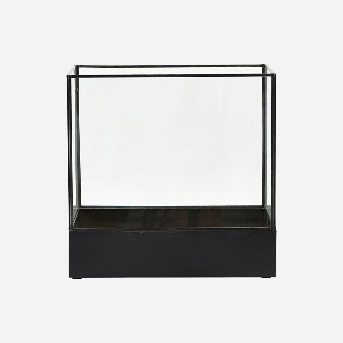 Image of   Display box, Plant, Black antique
