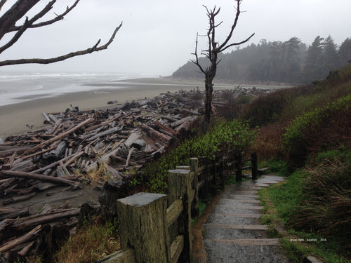Steps to Kalalock Beach in the Mist