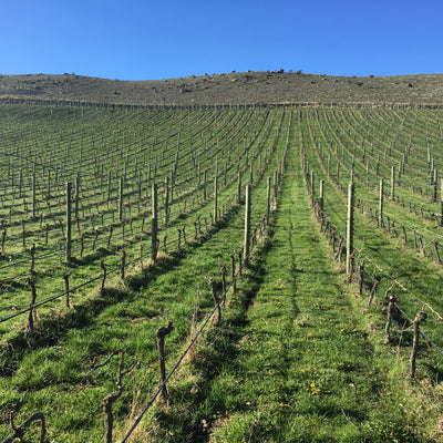 Vineyard Discovery - Saturday October 17th 2020
