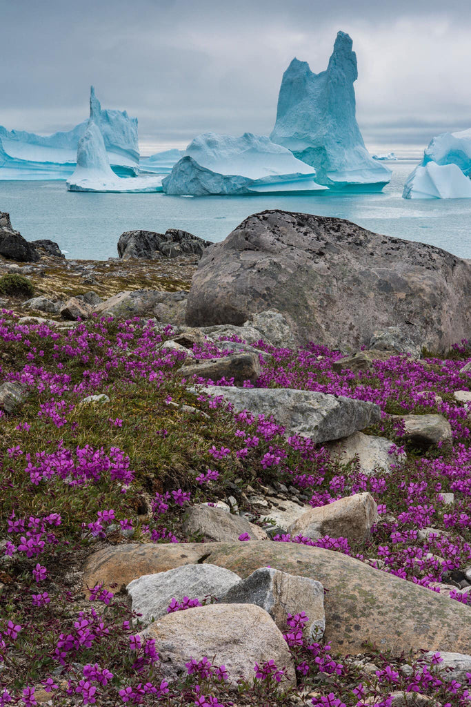 Icebergs in Greenland by Geoff Murray