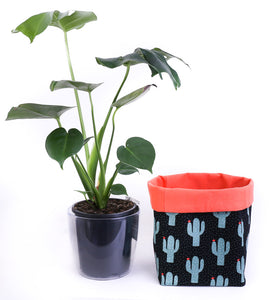 indoor monstera plant next to large cactus fabric planter