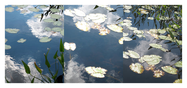 Lilies Triptych #3 - Photograph by Mona Mark