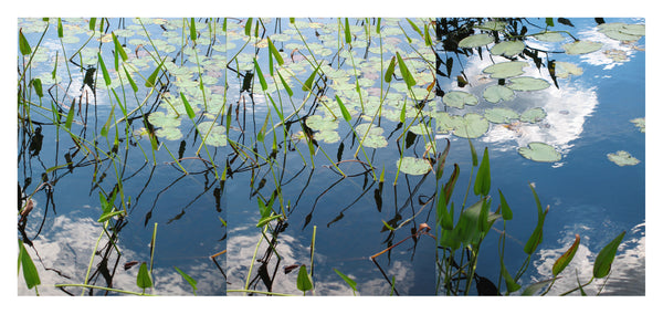 Lilies Triptych #4 - Photograph by Mona Mark