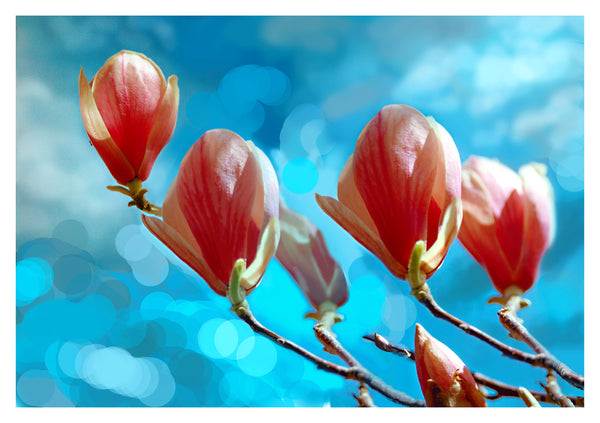 Magnolias Composite - Photograph by Mona Mark