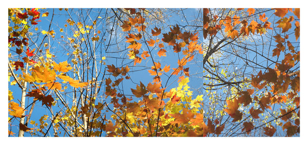 Autumn Leaves Triptych #1 - Photograph by Mona Mark