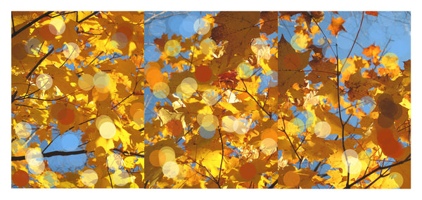 Autumn Leaves Triptych #3 - Photograph by Mona Mark