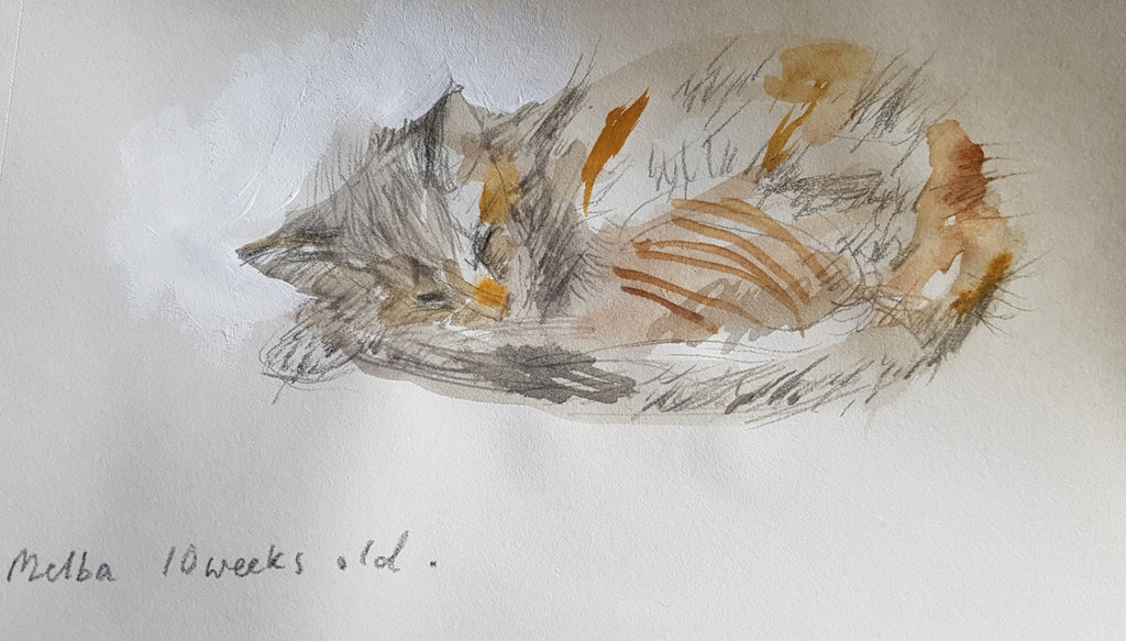 Tabby kitten watercolour and pencil sketch by Julia Laing (c)2021