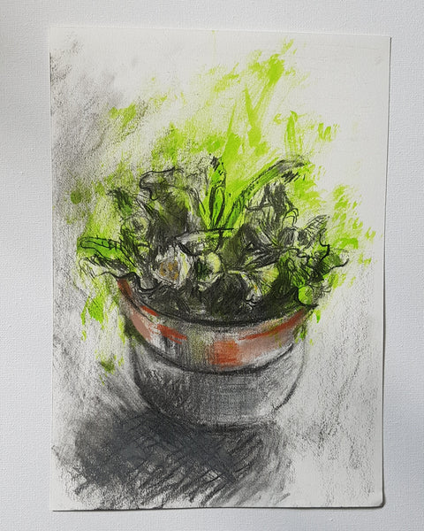 A4 size drawing of potted plant by Julia Laing, against a white background.