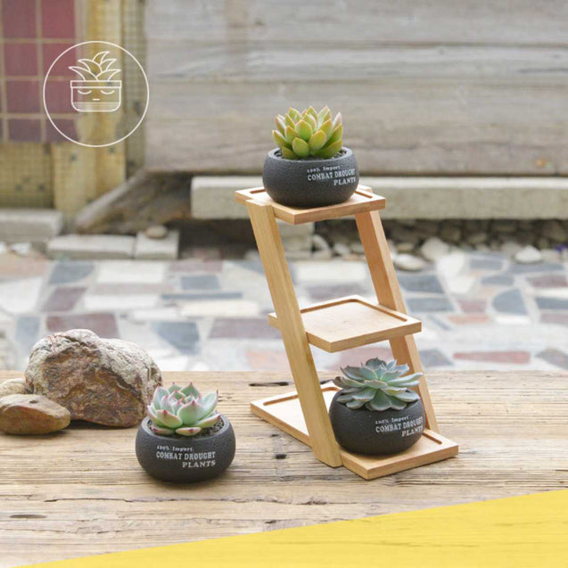 Small Cement Flowerpot With Bamboo Frame- 14788