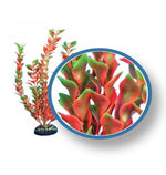 Red Ludwigia 12""