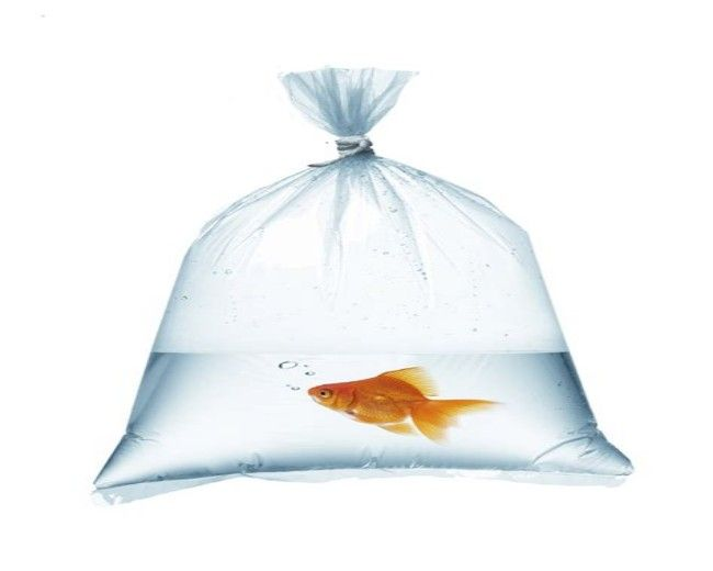 Clear Poly Bag 16x28 (450 pcs)