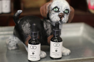 Infinite CBD Oil for Pets