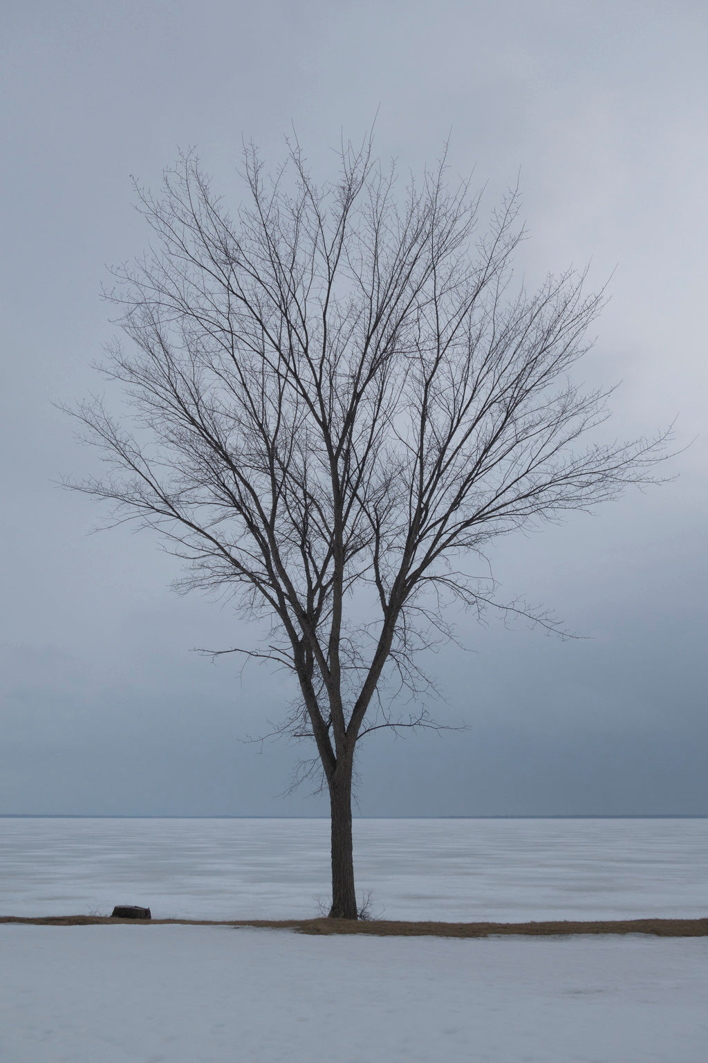 Tree on snow-day