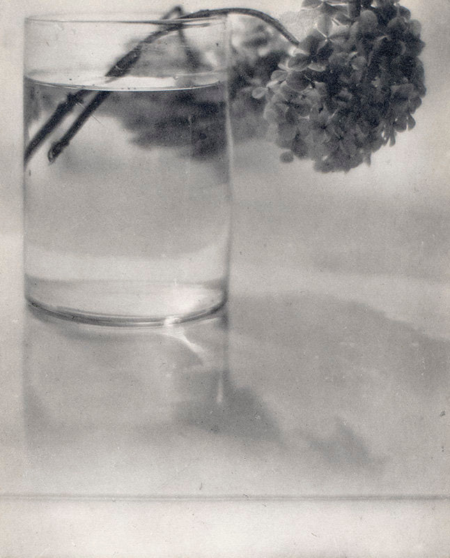 Still Life (hydrangeas in a glass) - Baron Adolph De Meyer | FFOTO