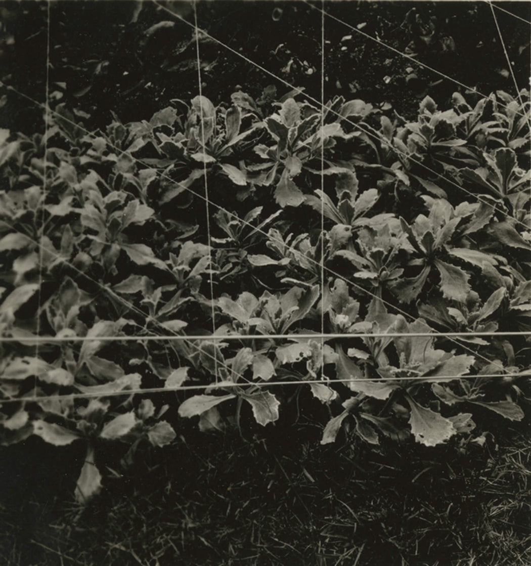 Untitled [plants underneath netting]