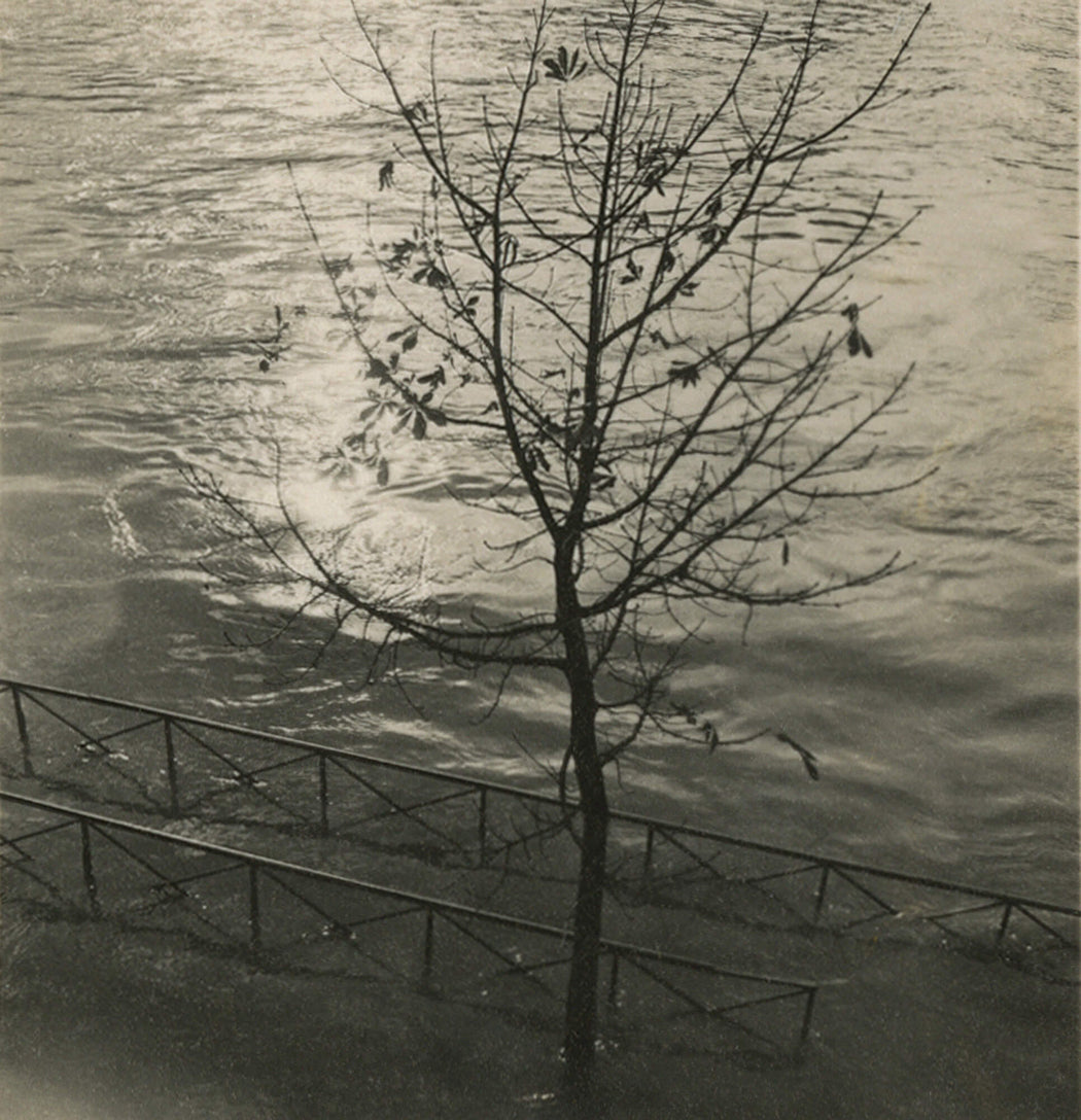 Untitled [small tree in water]