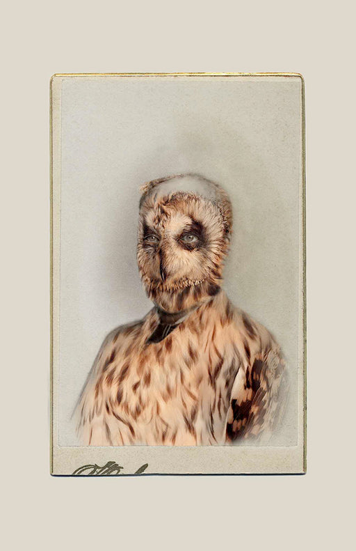 FFOTO-Sara Angelucci-Aviary (Short-eared Owl/endangered)