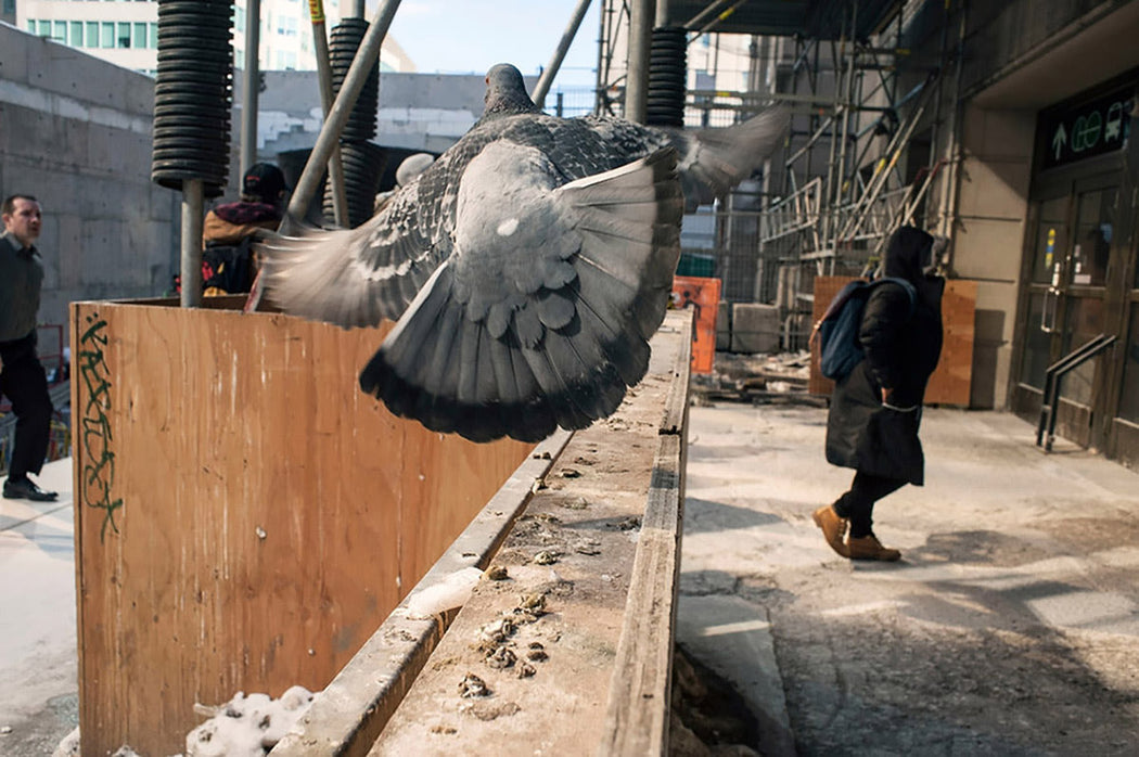 Pigeon, Union Station, Toronto, Canada - Larry Towell | FFOTO