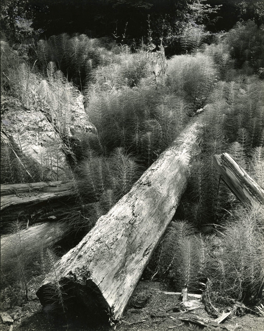 Log and Horsetails - Wynn Bullock | FFOTO