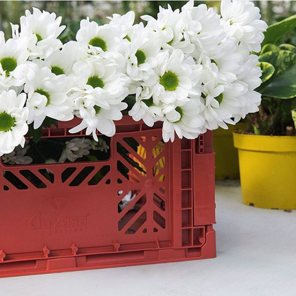 Folding Crates | Tile Red