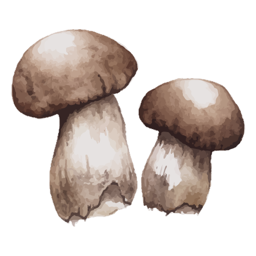 Pair of mushrooms | 2 pieces