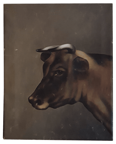 Primitive Cow Portrait