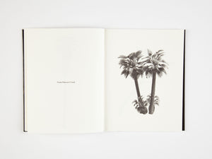 A Few Model Palm Trees by Bruno Roels