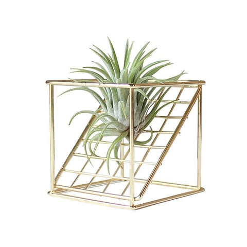 Geometrical Square Grid Air Plant Stand