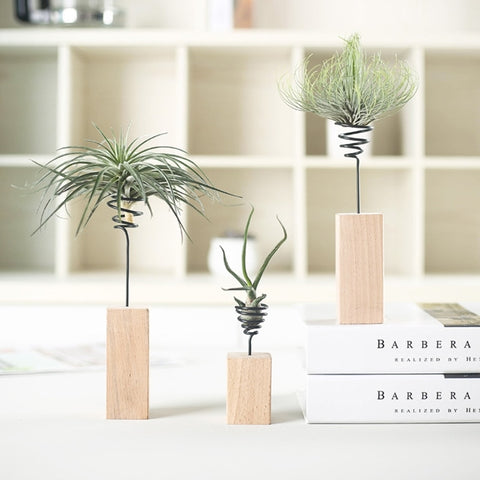 Air Plant Desk Stand