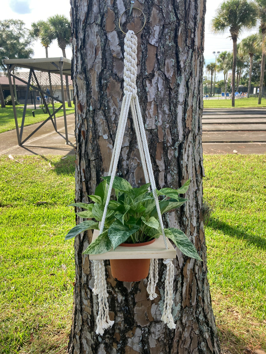 "Macrame Single Plant Holder - 6"" pot"