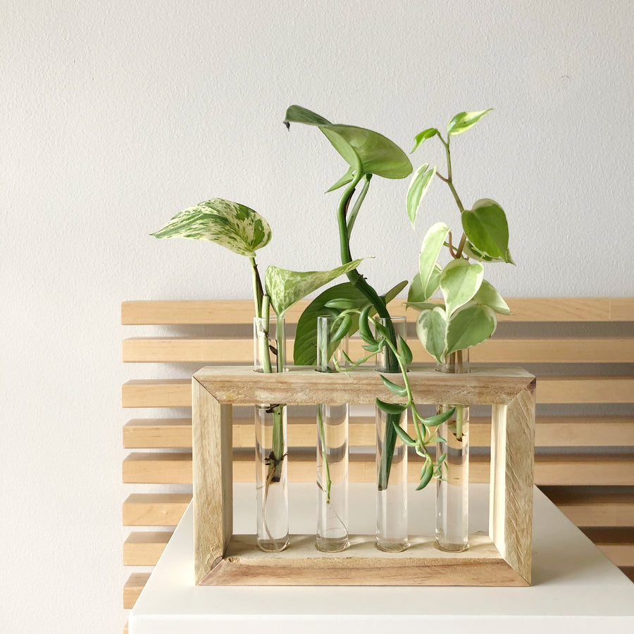 Propagation Station with 4 Glass Tubes | Wood Hanging Planter