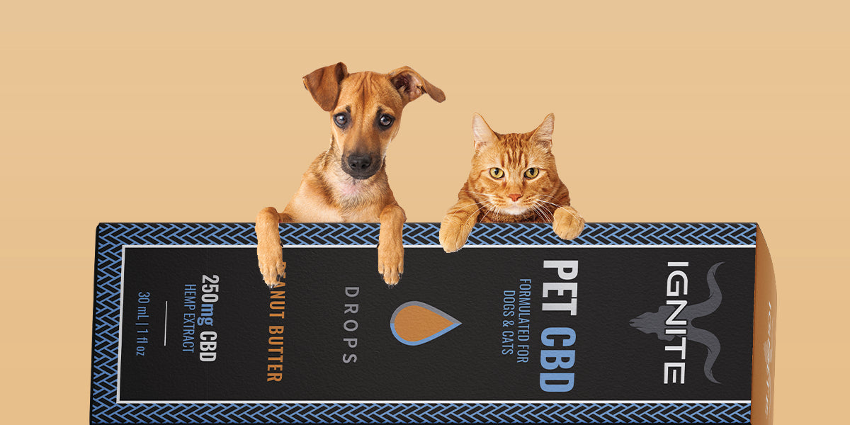 How Ignite CBD Can Help Your Pet