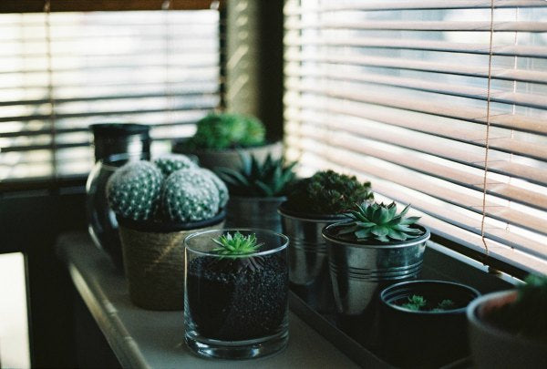 best plants for your bedroom