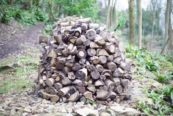 pile of logs in a forest