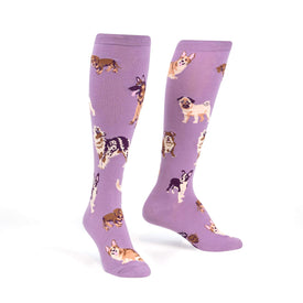 Stay Pawsitive Funny Pets Womens Novelty Knee High Socks