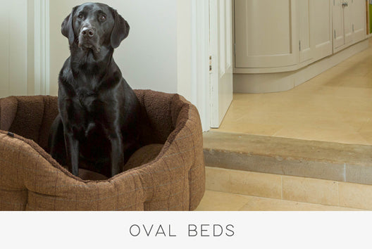 Oval Bed
