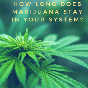 How long does cannabis stay in your urine?