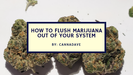 How to Flush Marijuana Out of Your System