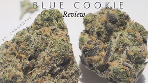 An Activist Reviews Every Top Strain in Medical Cannabis