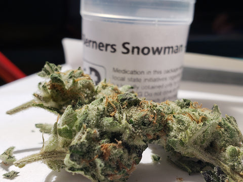 Snowman Strain Review – Canna Dave