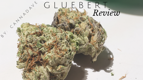 Gluebert Strain Review